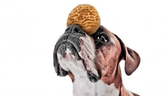 Give dogs perfect training treats they'll love